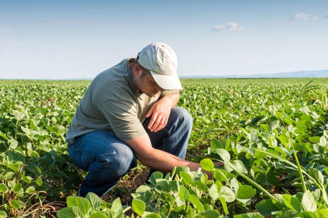 estágio em agronomia